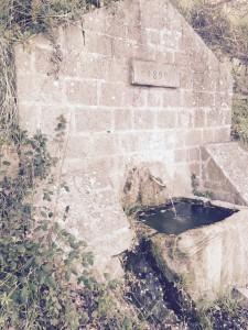 Wild glimpse, old fountain