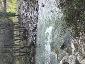 Wild side, San Severino Lucano - Bosco Magnano (PZ, Italy)