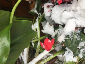 Flowers and snow 
